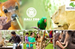 0007841_bali-zoo-full-day-entry-tickets-adult-child-starting-from-rm26