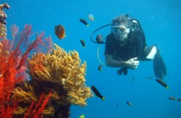amed diving 4
