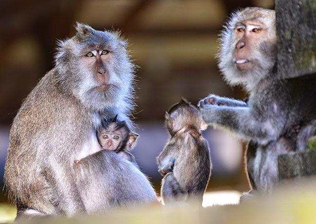 alas-kedaton-monkey-forest-bali