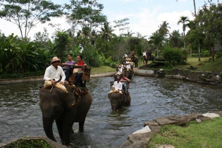 1460694268-edef7d0bf2-true-balinese-experience-gogonesia-elephant