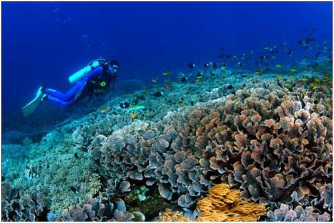 nusa-penida-underwater-1
