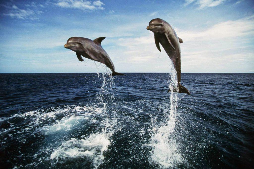 Dolphin-East-3