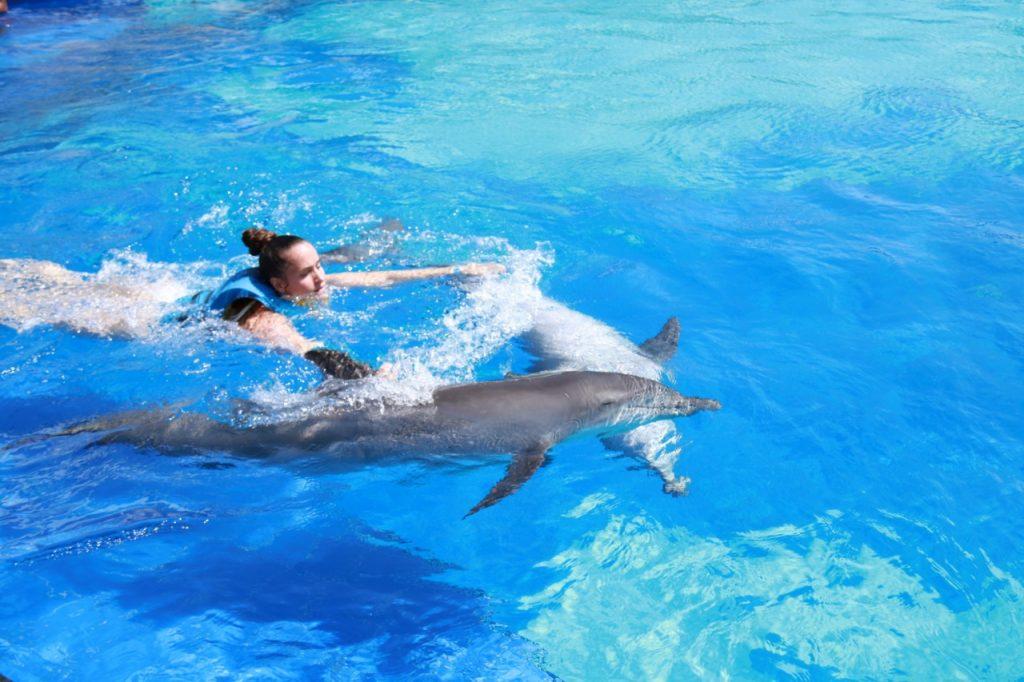 dolphin 5 – Copy