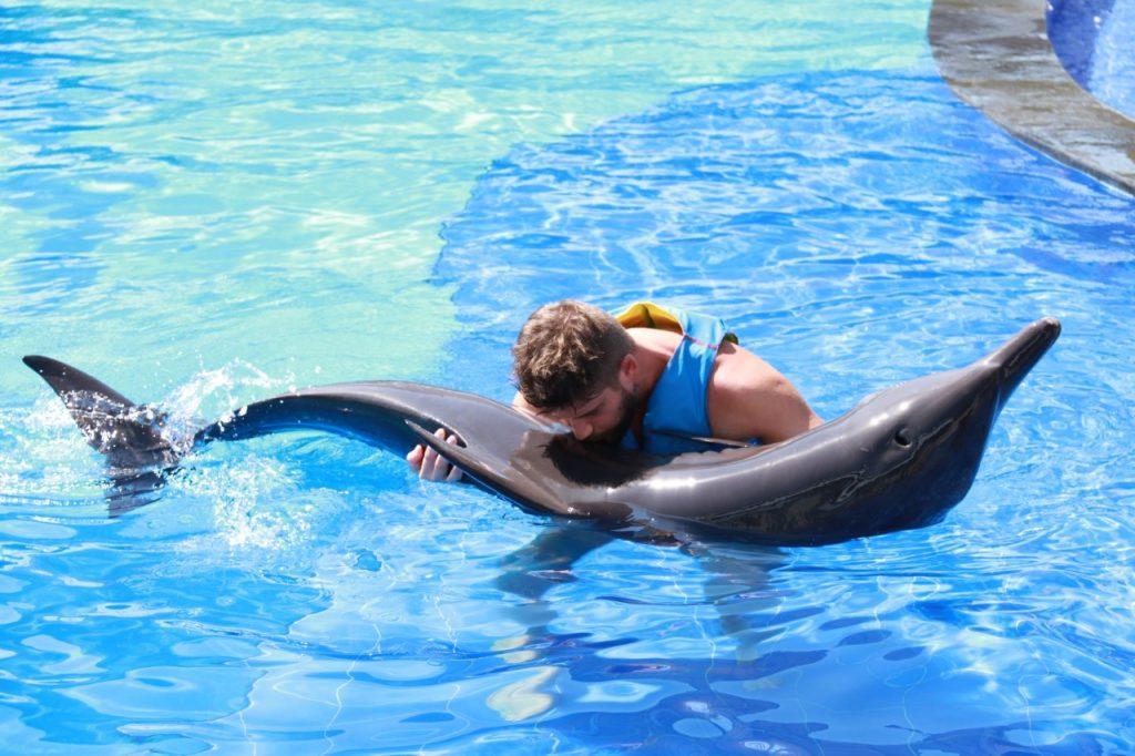 dolphin 7 – Copy